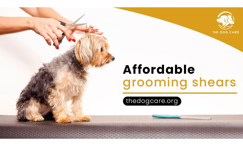 Affordable grooming shears