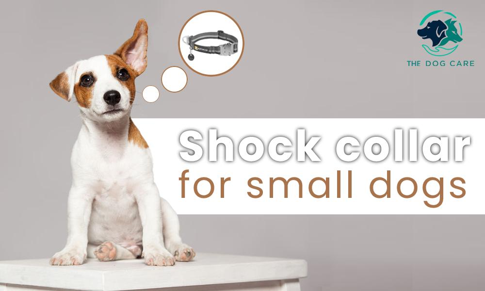 Shock Collar for small dogs