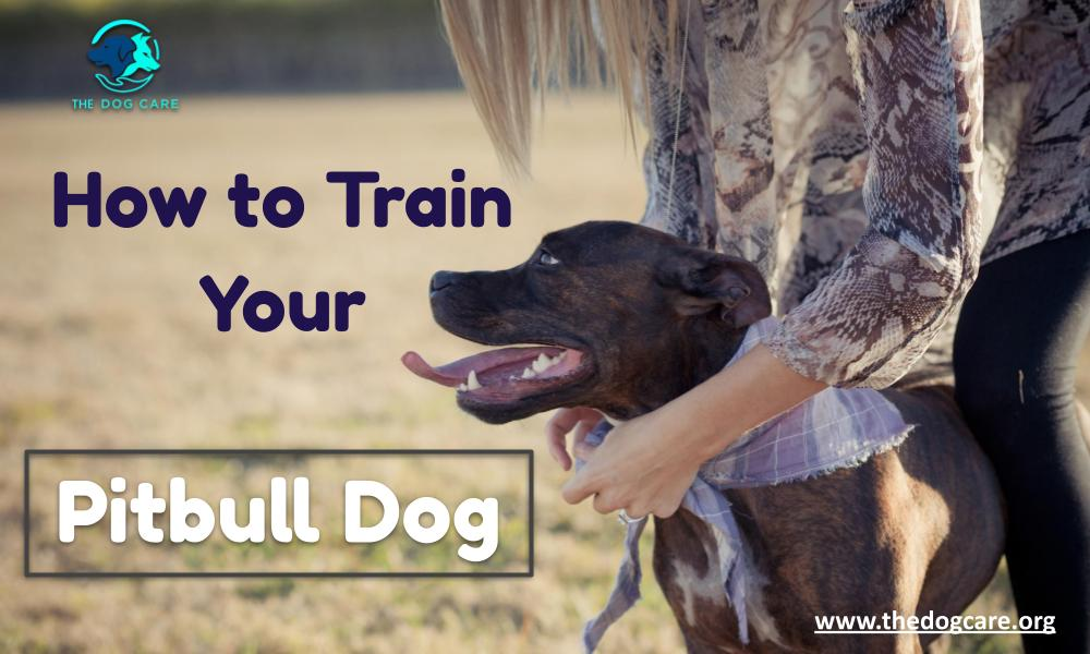 How to train your Pitbull Dog