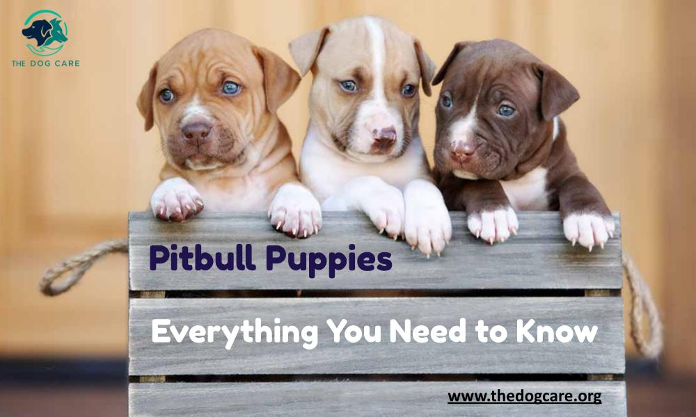 Pitbull Puppies Everything You Need to Know
